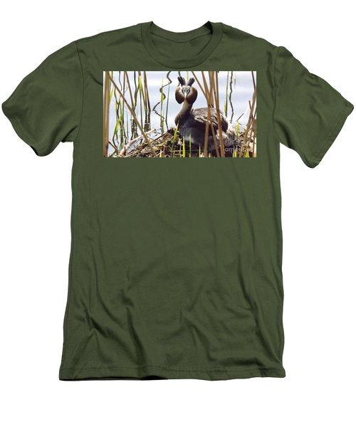 Nesting Grebe Men's T-Shirt (Athletic Fit)