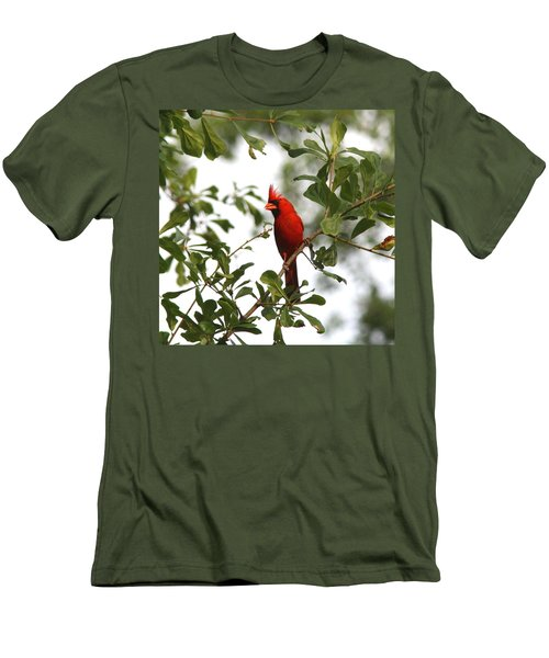 Northern Cardinal - In The Wind Men's T-Shirt (Athletic Fit)