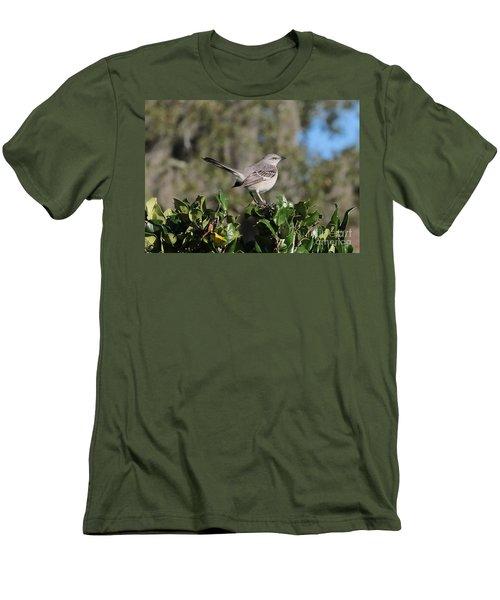 Northern Mockingbird Men's T-Shirt (Slim Fit) by Carol Groenen
