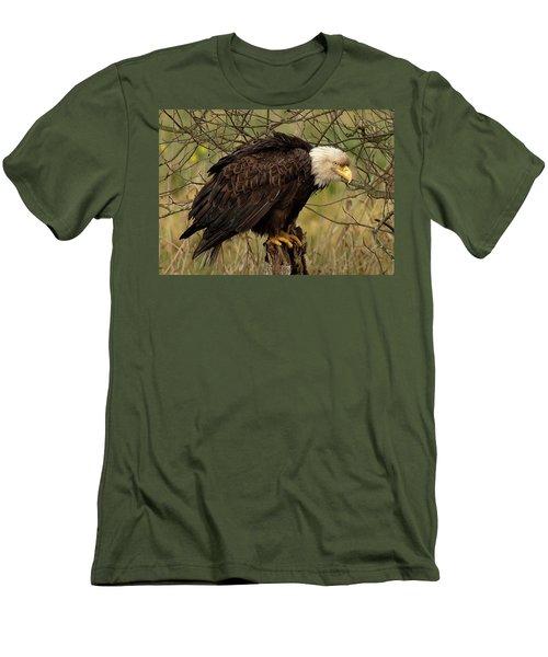 Old Eagle Men's T-Shirt (Slim Fit) by Sheldon Bilsker
