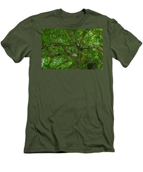 Old Linden Tree. Men's T-Shirt (Athletic Fit)
