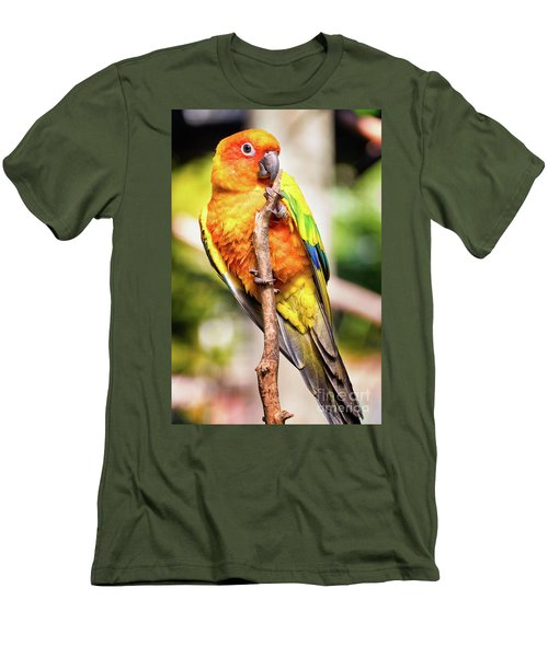 Orange Yellow Parakeet Men's T-Shirt (Slim Fit) by Stephanie Hayes