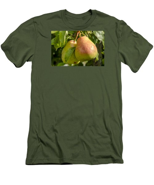 Organic Pears Hanging In Orchard Men's T-Shirt (Slim Fit) by Teri Virbickis