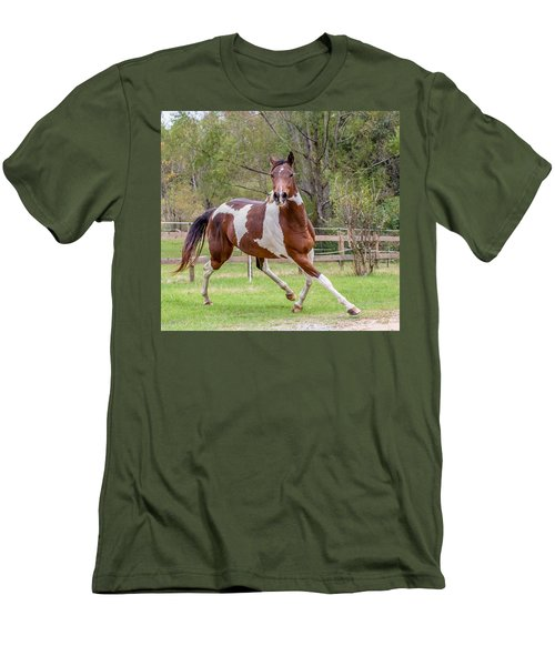 Paint Mare In Field Men's T-Shirt (Slim Fit) by Gwen Vann-Horn