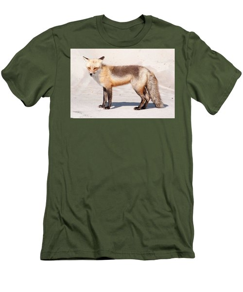 Portrait Of A Red Fox Men's T-Shirt (Athletic Fit)