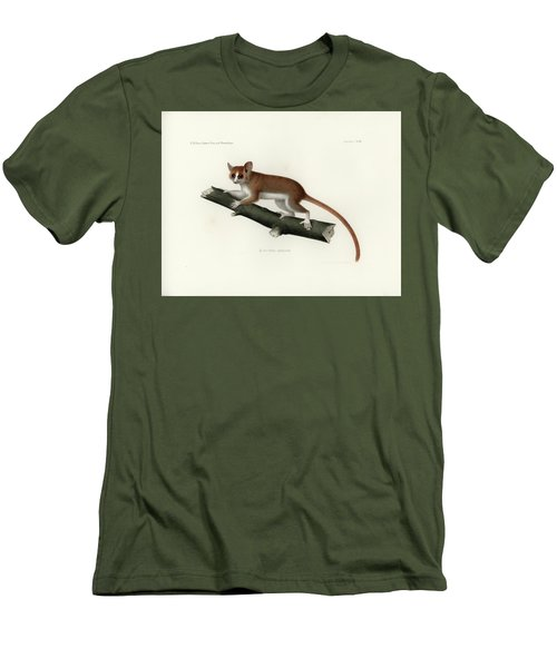 Pygmy Mouse Lemur Men's T-Shirt (Slim Fit) by Hugo Troschel