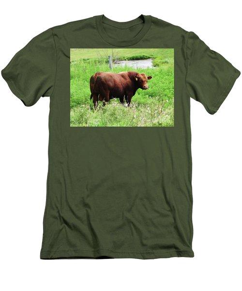 Red Angus Bull Men's T-Shirt (Slim Fit) by J L Zarek
