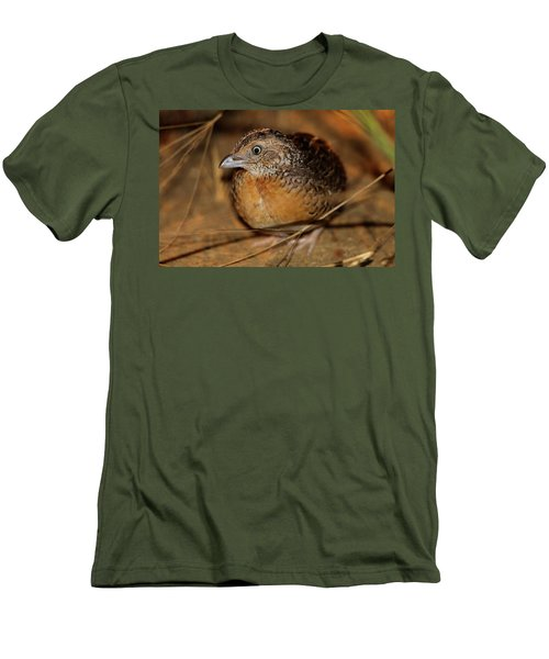 Red-chested Button-quail Men's T-Shirt (Athletic Fit)