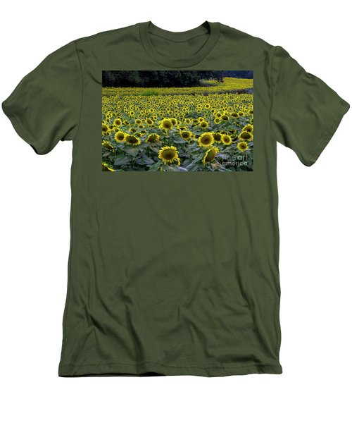 River Of Sunflowers Men's T-Shirt (Slim Fit) by Barbara Bowen