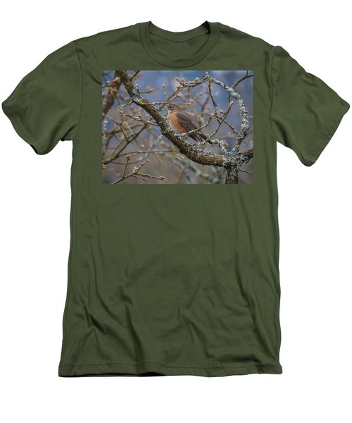 Robin In A Tree Men's T-Shirt (Slim Fit) by Keith Boone