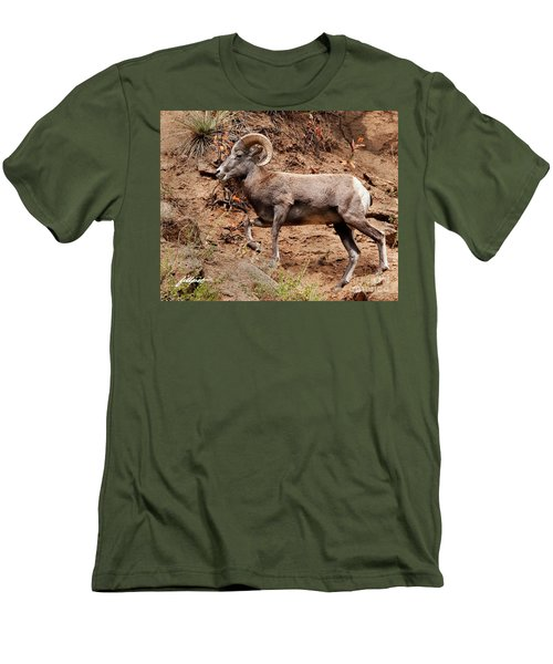 Rocky Mt. Big Horn Sheep Men's T-Shirt (Athletic Fit)