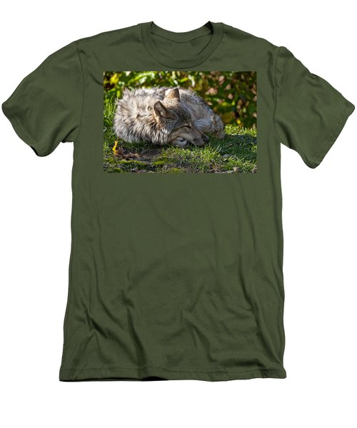 Men's T-Shirt (Slim Fit) featuring the photograph Sleeping Timber Wolf by Michael Cummings