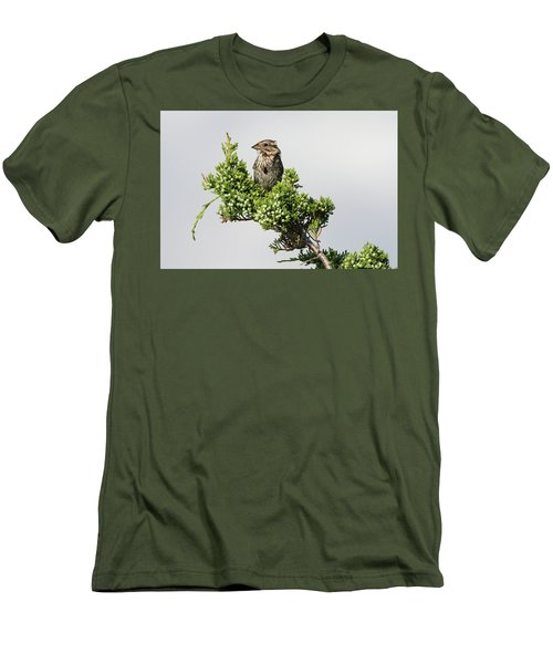 Song Sparrow Port Jefferson New York Men's T-Shirt (Athletic Fit)