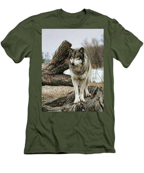 Still Wolf Men's T-Shirt (Athletic Fit)