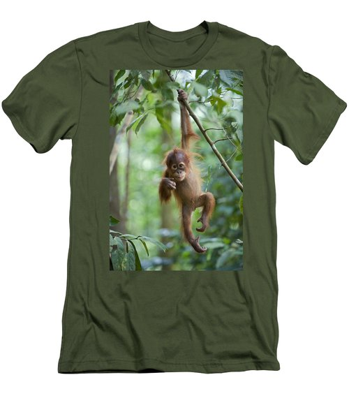 Sumatran Orangutan Pongo Abelii One Men's T-Shirt (Slim Fit) by Suzi Eszterhas