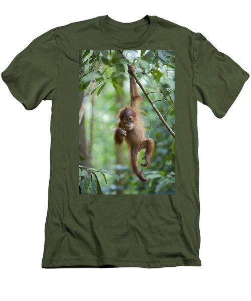 Sumatran Orangutan Pongo Abelii One Men's T-Shirt (Athletic Fit)