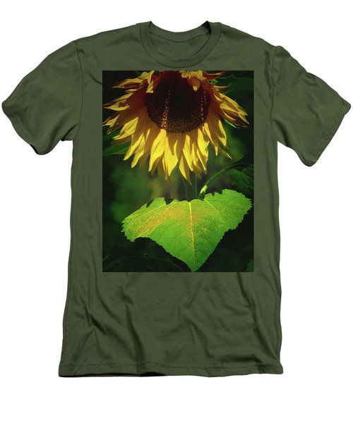 Sunflower And Gold Leaf - Beauty In The Garden - Floral Photography Men's T-Shirt (Athletic Fit)