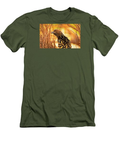 Western Bowerbird Men's T-Shirt (Athletic Fit)