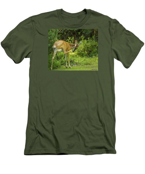 White Tailed Deer Scratching It's Nose Men's T-Shirt (Slim Fit) by Ken Morris