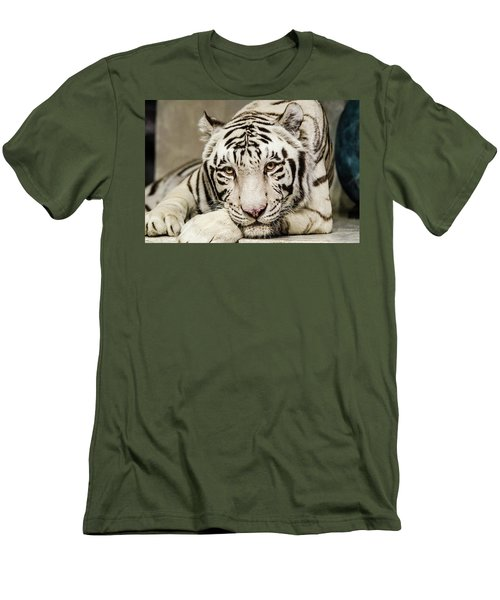 White Tiger Looking At You Men's T-Shirt (Athletic Fit)