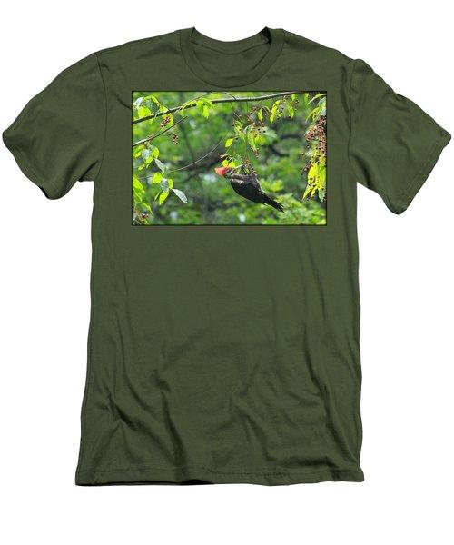Wild Cherry Snack Men's T-Shirt (Slim Fit) by Tammy Schneider