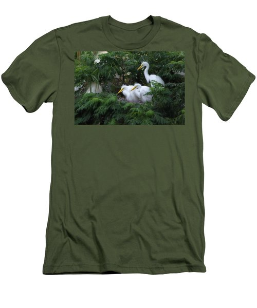 Young Egrets Fledgling And Waiting For Food-digitart Men's T-Shirt (Athletic Fit)