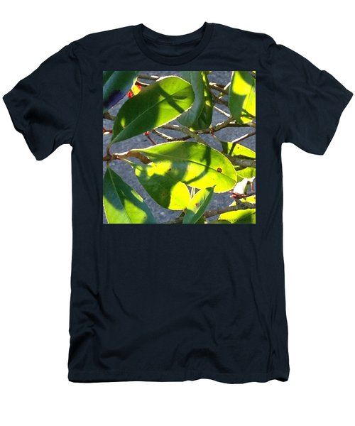 Backlit Leaves, Afternoon Light, Late Men's T-Shirt (Athletic Fit)