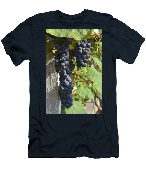 Bunches Of Grapes Men's T-Shirt (Athletic Fit)