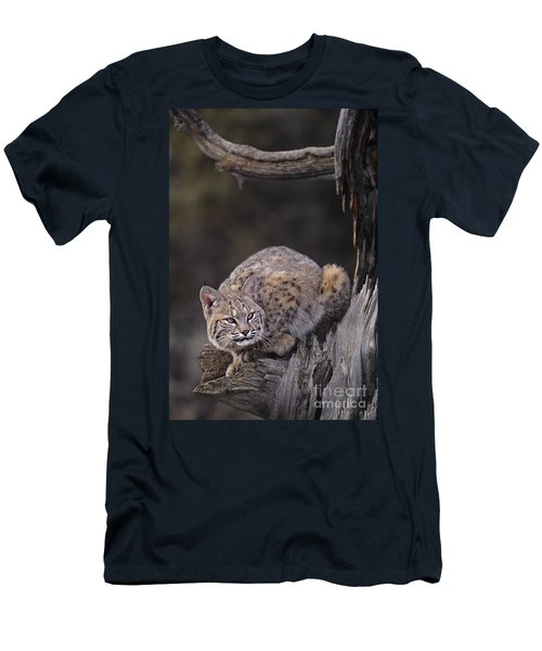 Crouching Bobcat Montana Wildlife Men's T-Shirt (Athletic Fit)