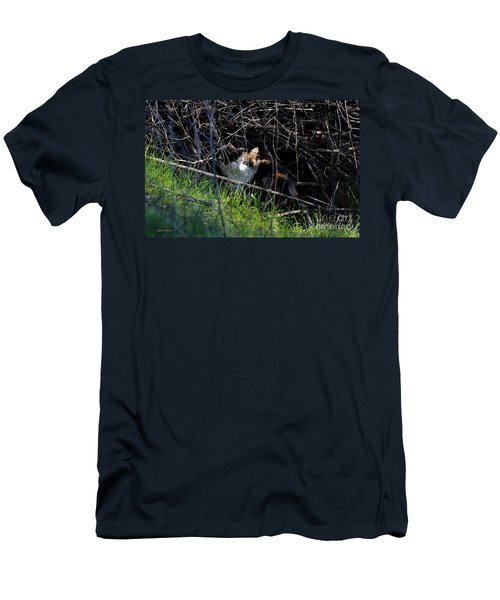 Frightened Feral Calico  Men's T-Shirt (Slim Fit) by Susan Wiedmann
