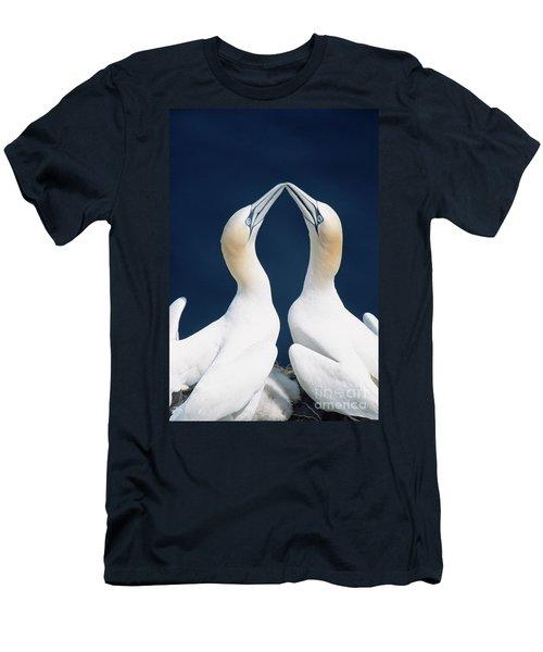 Greeting Gannets Canada Men's T-Shirt (Slim Fit) by Yva Momatiuk John Eastcott