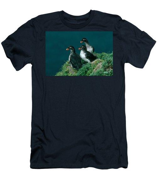 Parakeet Auklet Men's T-Shirt (Athletic Fit)
