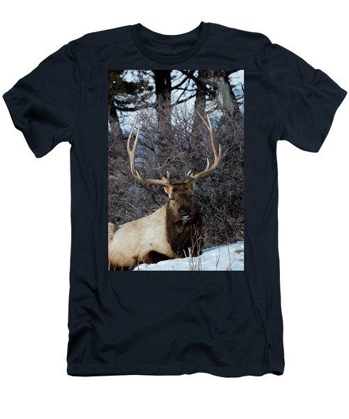 Wyoming Elk Men's T-Shirt (Slim Fit)