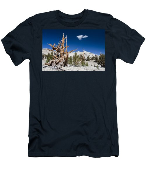 Bristlecone Pine - Pinus Longaeva Men's T-Shirt (Athletic Fit)