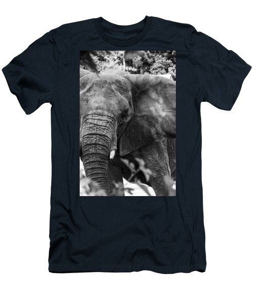 African Elephant  Men's T-Shirt (Slim Fit) by Kevin Blackburn