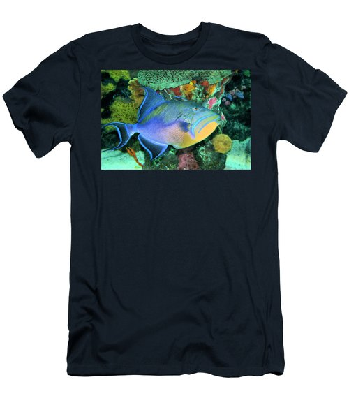 Queen Triggerfish Men's T-Shirt (Athletic Fit)