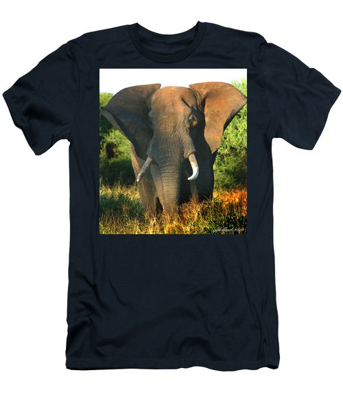 African Bull Elephant Men's T-Shirt (Athletic Fit)