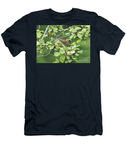 Cedar Waxwing Eating Berries Men's T-Shirt (Slim Fit) by Maili Page