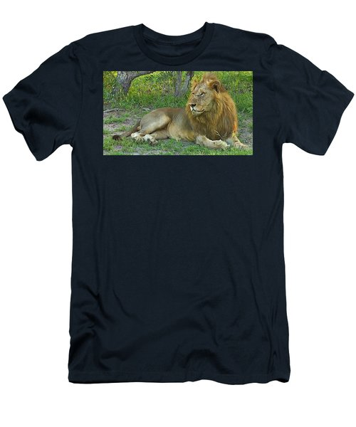 Lion Men's T-Shirt (Athletic Fit)