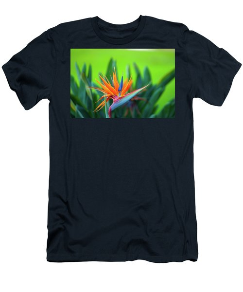 Victoria Falls Bird Of Paradise Men's T-Shirt (Athletic Fit)
