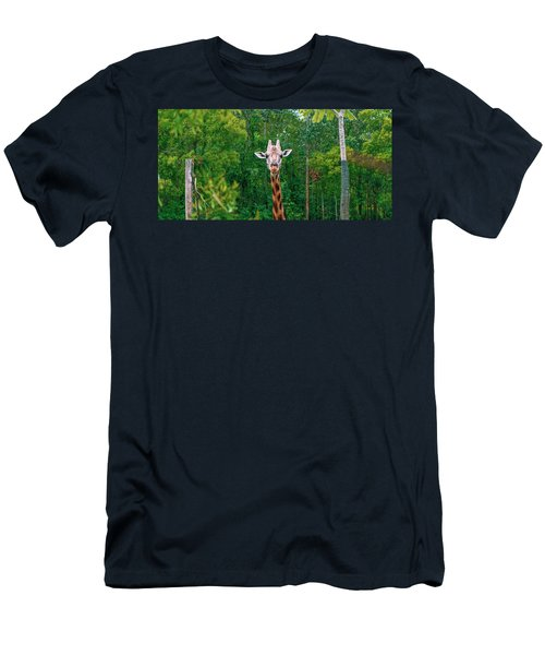 Giraffe Looking For Food During The Daytime. Men's T-Shirt (Athletic Fit)