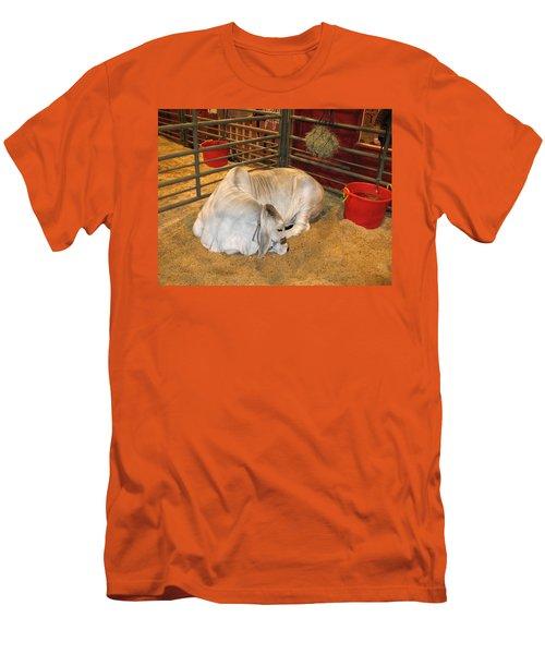 American Brahman Heifer Men's T-Shirt (Slim Fit) by Connie Fox