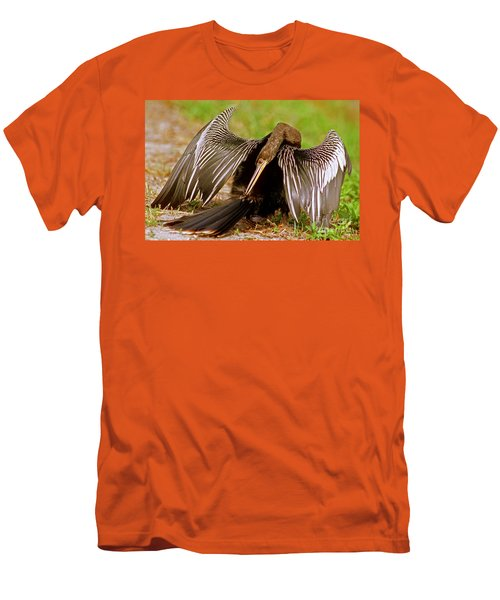 Anhinga Anhinga Anhinga Preening Men's T-Shirt (Athletic Fit)