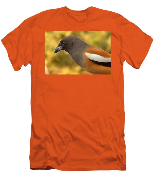 Indian Treepie. A Portrait. Men's T-Shirt (Slim Fit) by Fotosas Photography