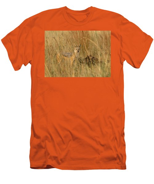 Silver Backed Jackal Men's T-Shirt (Athletic Fit)