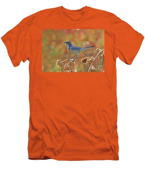 Western Scrub-jay Men's T-Shirt (Athletic Fit)