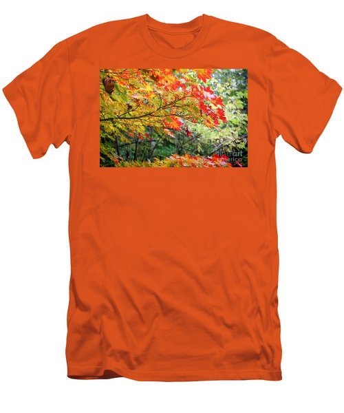 Arboretum Autumn Leaves Men's T-Shirt (Athletic Fit)