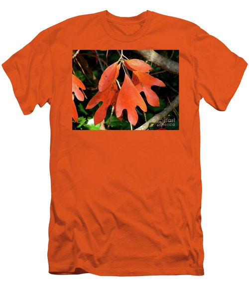 Autumn Sassafras Leaves Men's T-Shirt (Athletic Fit)