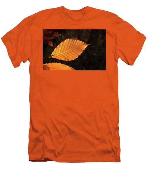 Beech Leaves In Afternoon Sun Men's T-Shirt (Athletic Fit)