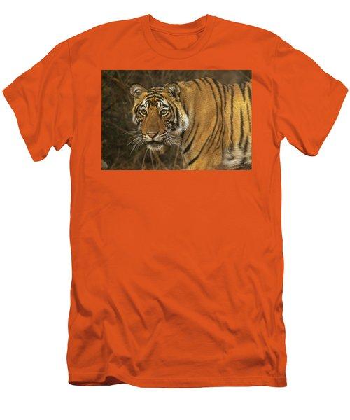 Bengale Tiger Men's T-Shirt (Athletic Fit)